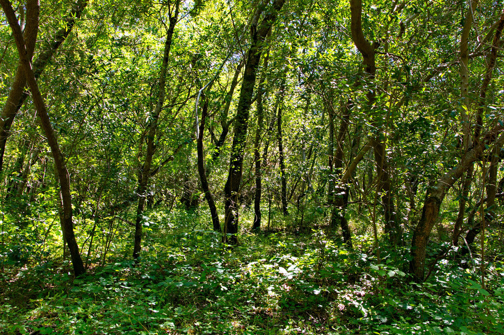 Mount diablo state park Tassajara-24.jpg