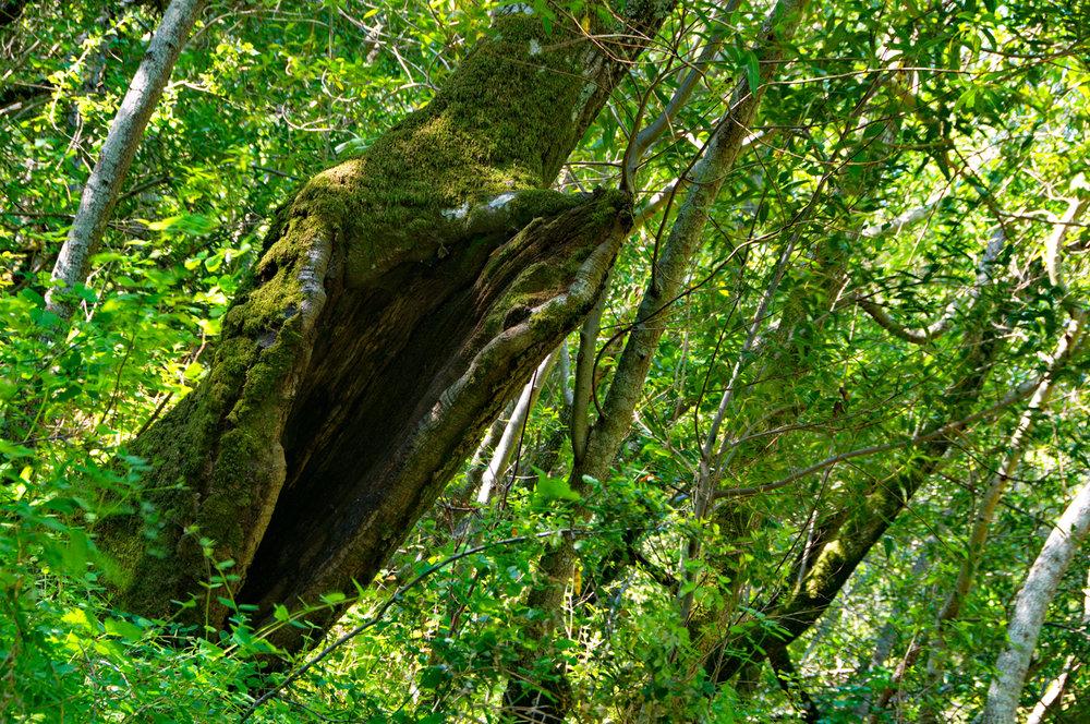 Tassajara Creek - Mount Diablo State Park