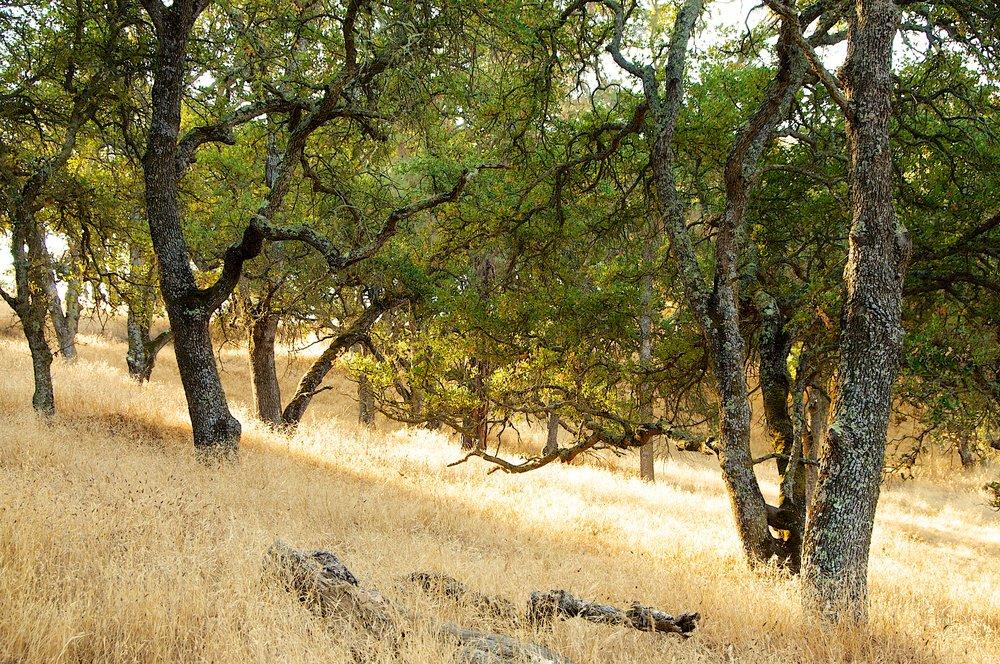 Pine Canyon - Mount Diablo State Park