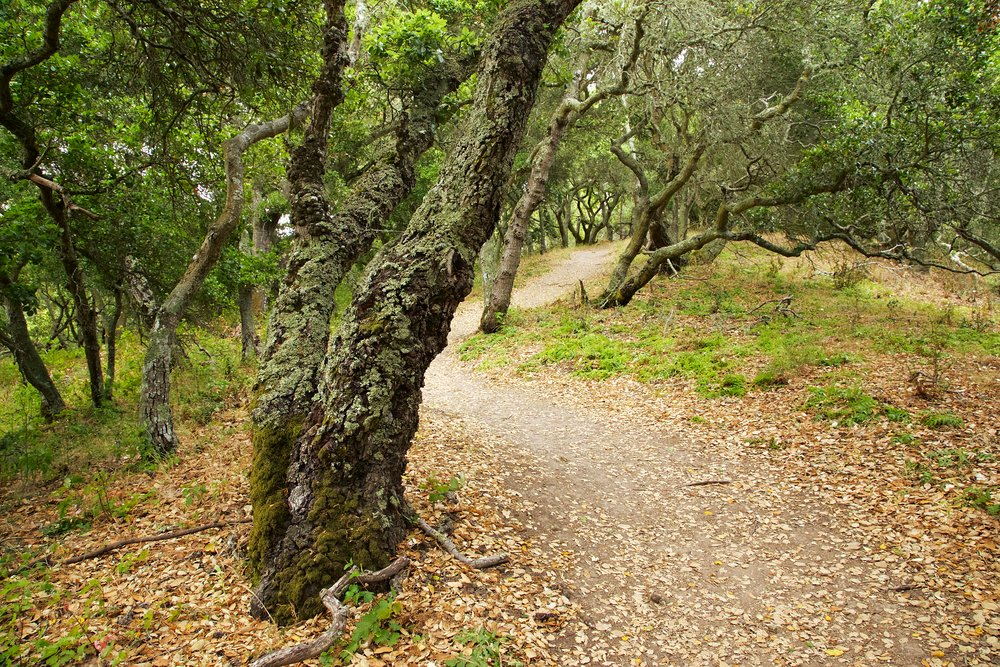 Seafoam Trails - Kennedy Grove Regional Park