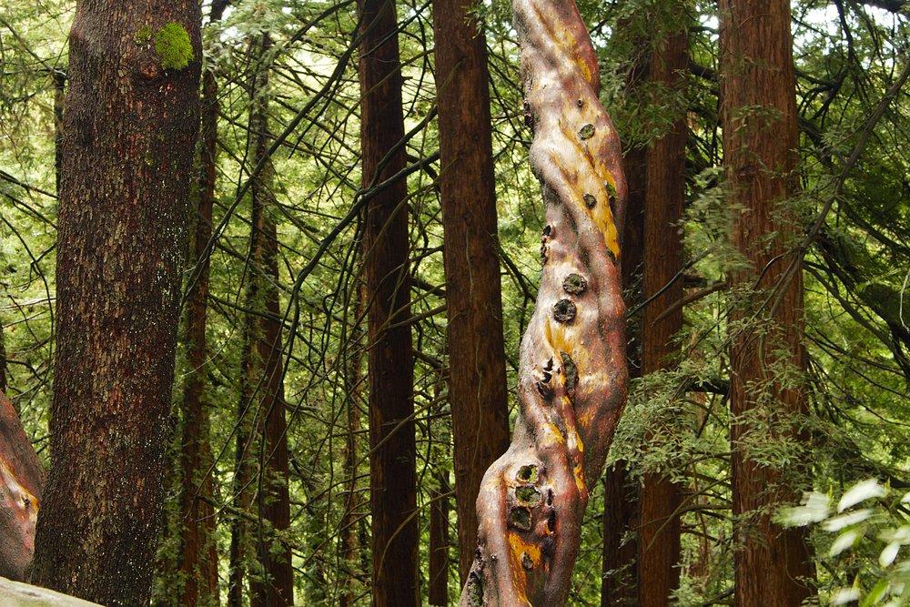 Moon Gate to Redwood Peak - Redwood Regional Park