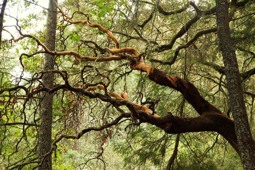 Matt Davis Trail - Mount Tamalpais State Park