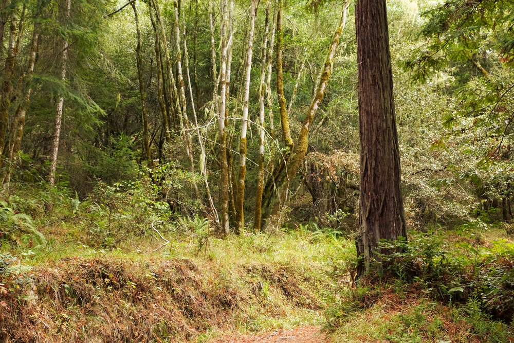 Lagunitas Creek - Mount Tamalpais Watershed
