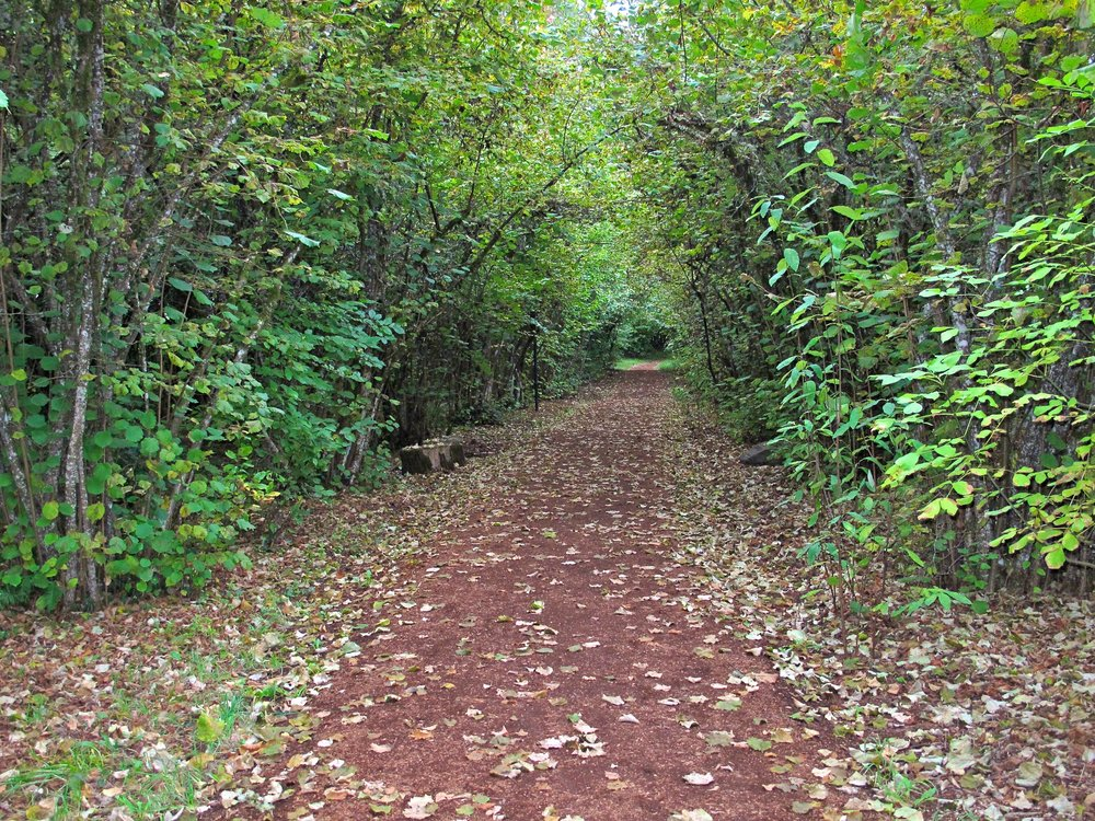 Pre's Trail - Alton Baker Park