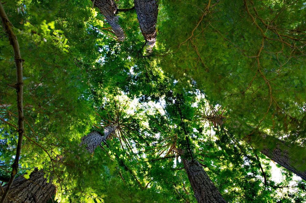 Purisima Creek - Purisima Creek Redwoods Preserve