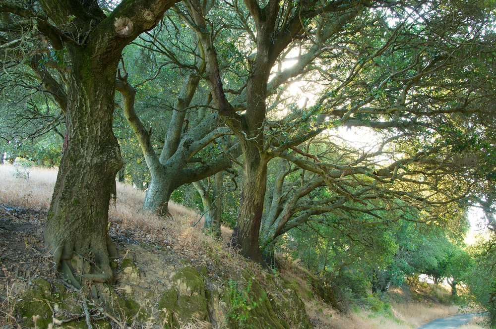 Hike to Briones Peak - Briones Regional Park