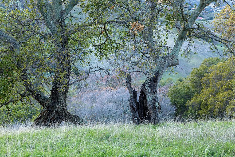 Briones Regional Park Diablo View-2.jpg