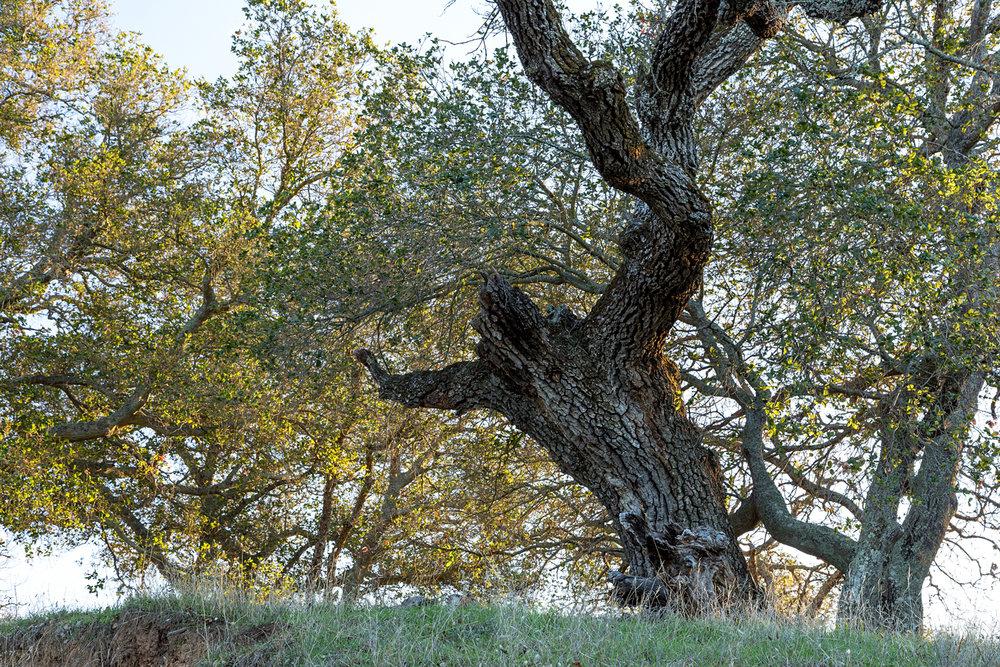 Briones Regional Park Diablo View-3.jpg