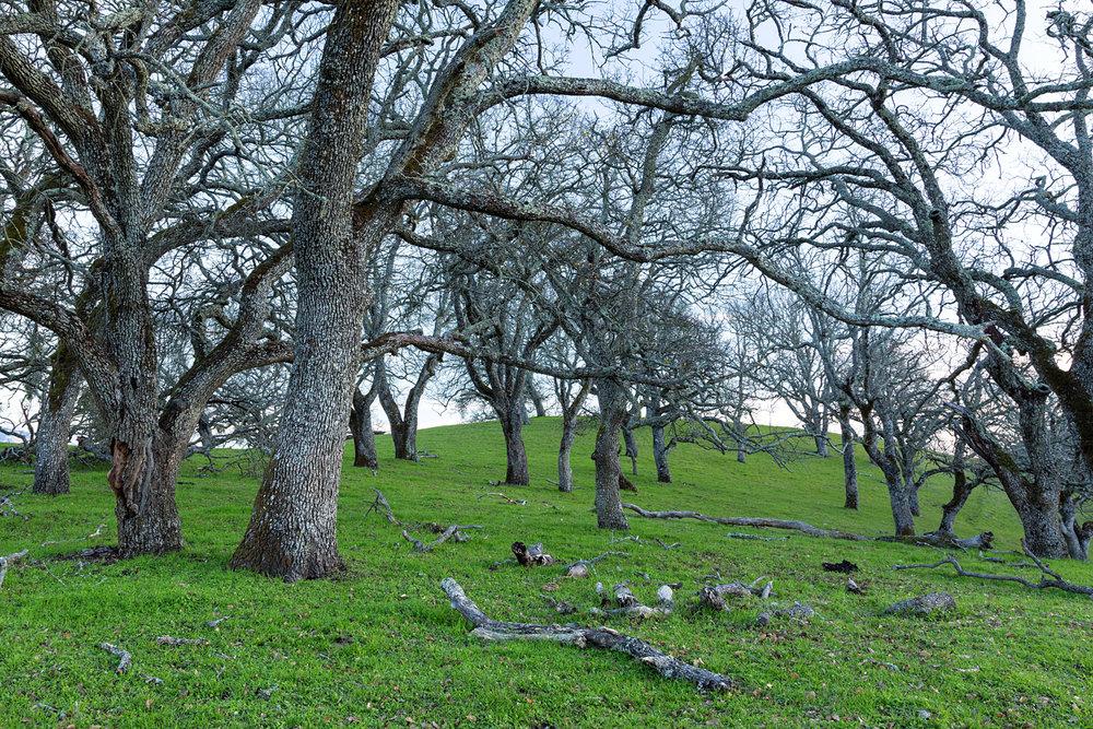 Briones Regional Park Diablo View-5.jpg