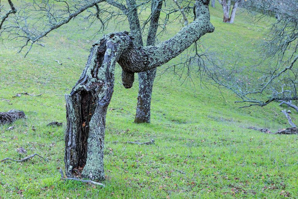 Briones Regional Park Diablo View-7.jpg
