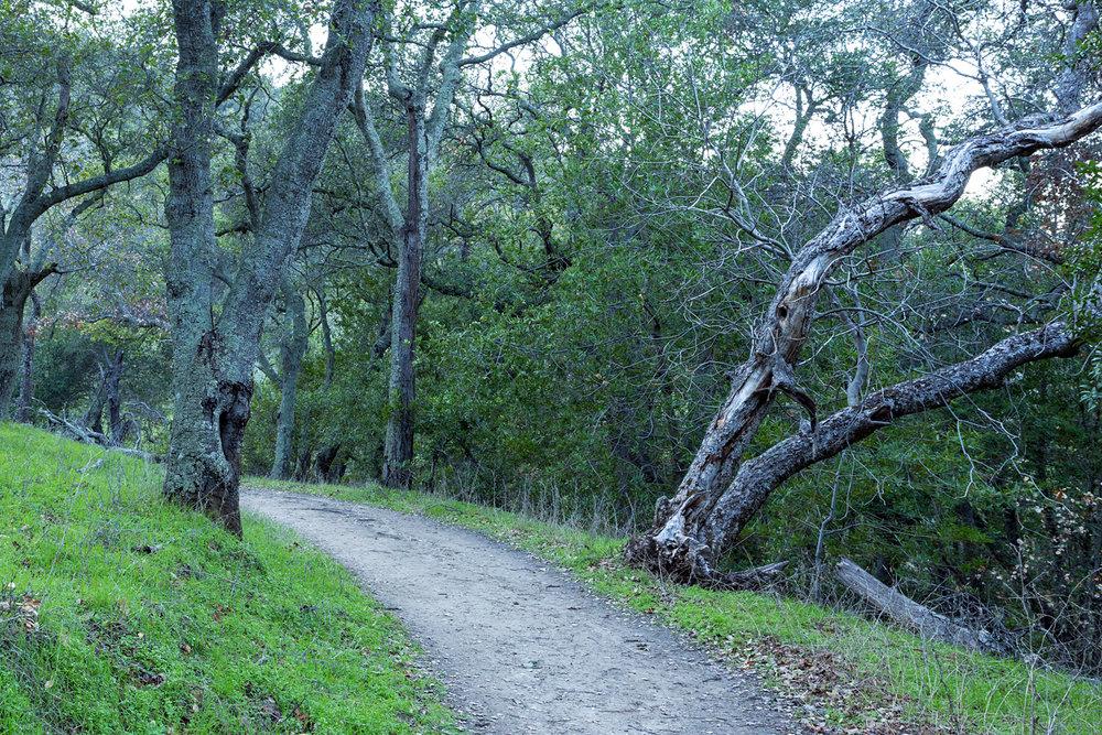 Briones Regional Park Diablo View-9.jpg