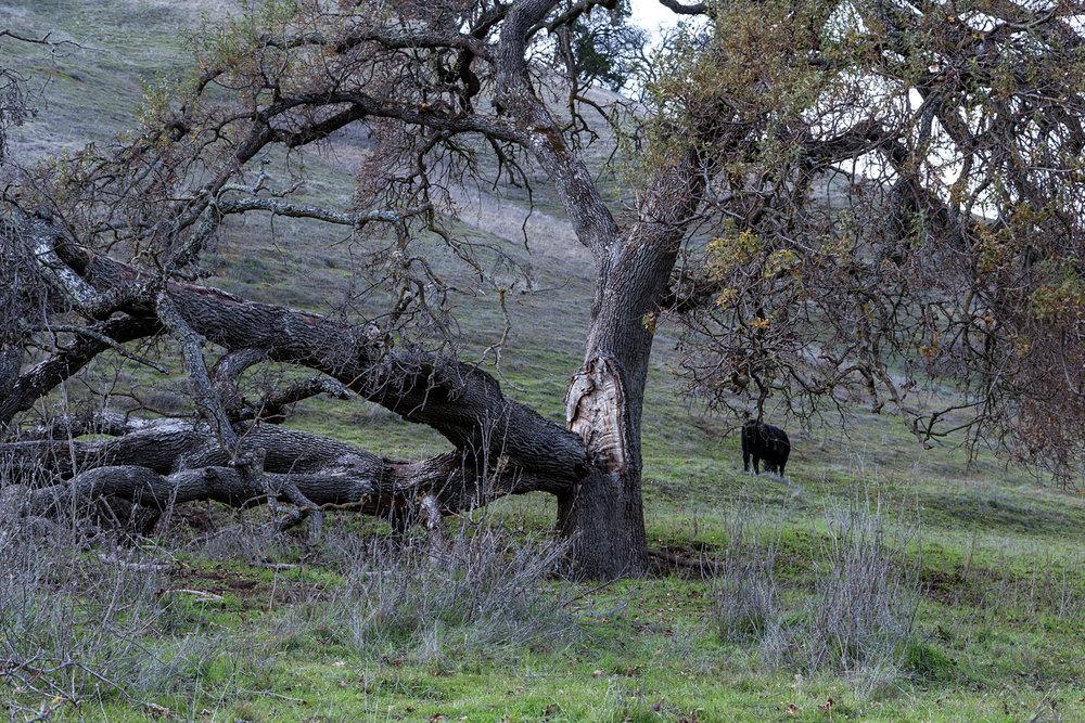 Briones Regional Park Diablo View-10.jpg