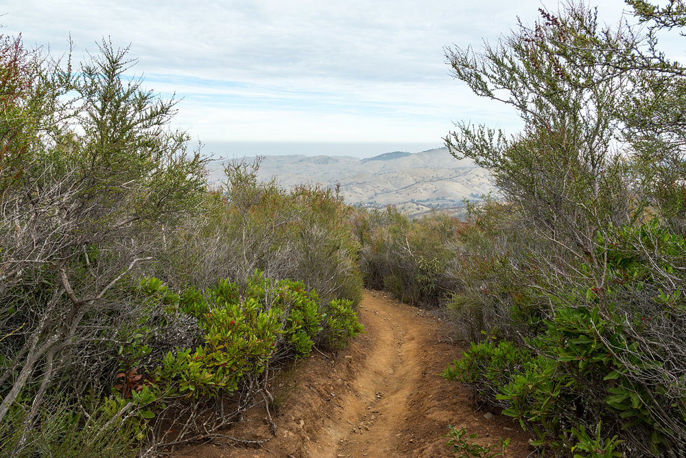 Back Creek Trail Mount Diablo State Park-4.jpg