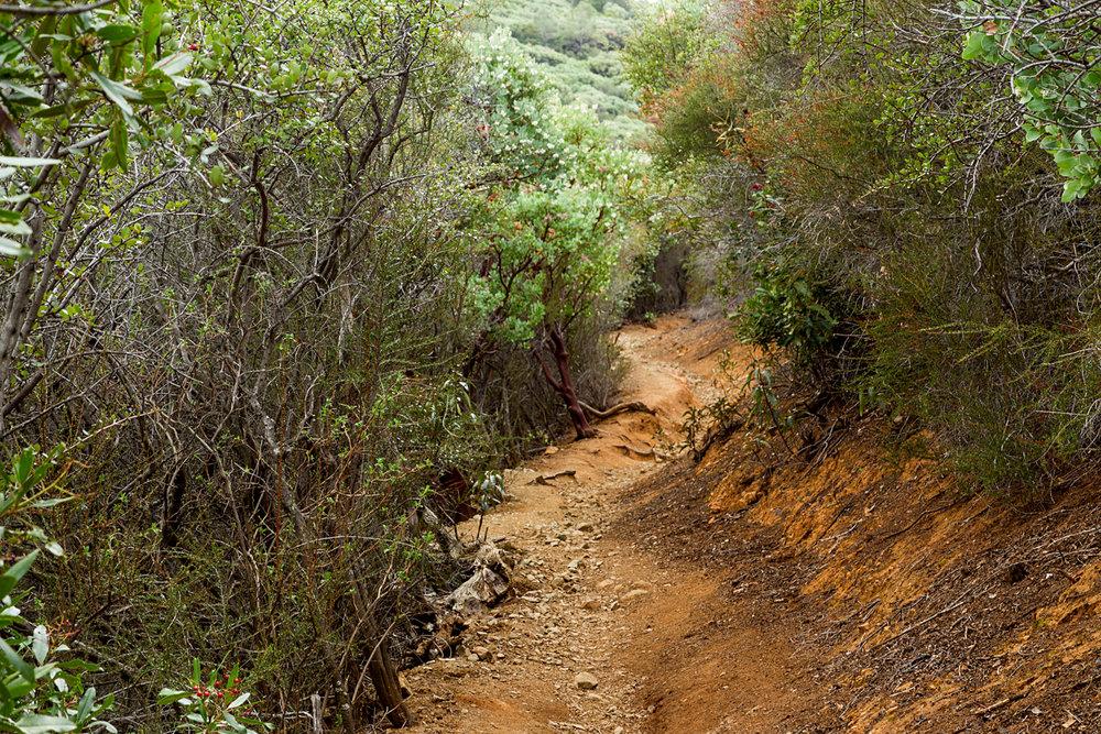 Back Creek Trail Mount Diablo State Park-5.jpg