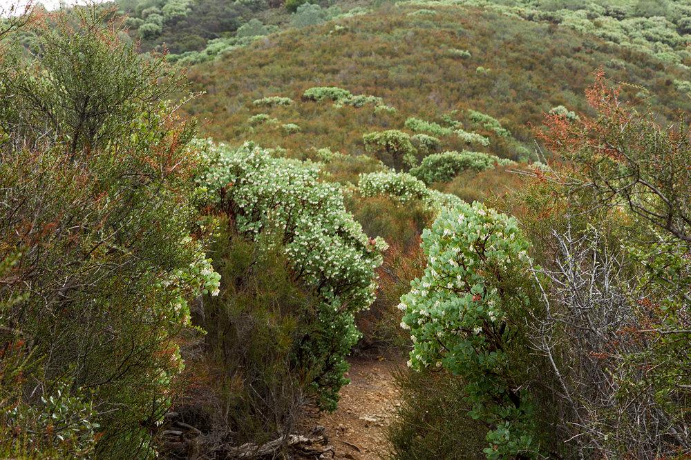 Back Creek Trail Mount Diablo State Park-6.jpg