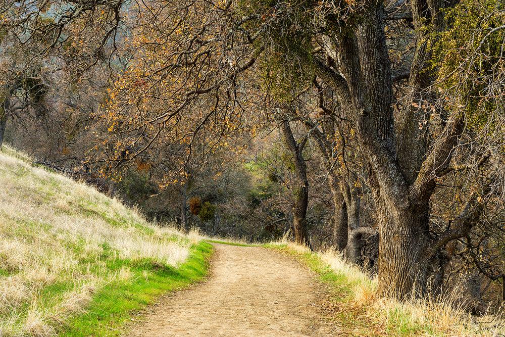Back Creek Trail Mount Diablo State Park-8.jpg