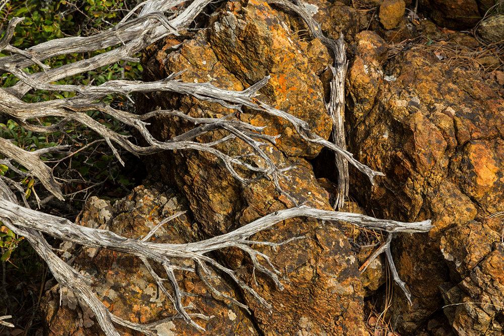 Back Creek Trail Mount Diablo State Park-10.jpg
