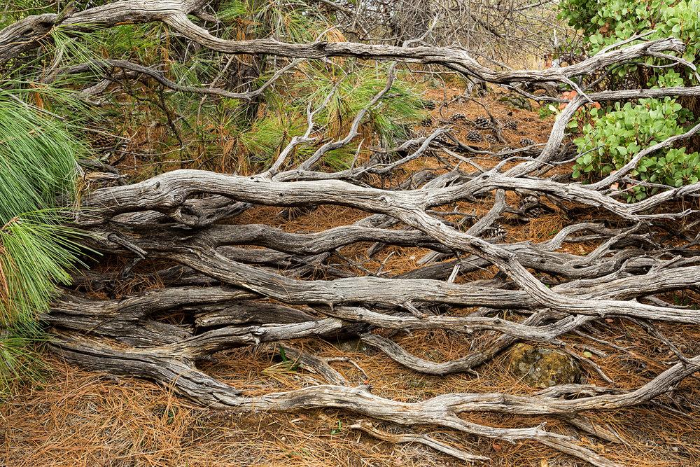 Back Creek Trail Mount Diablo State Park-11.jpg