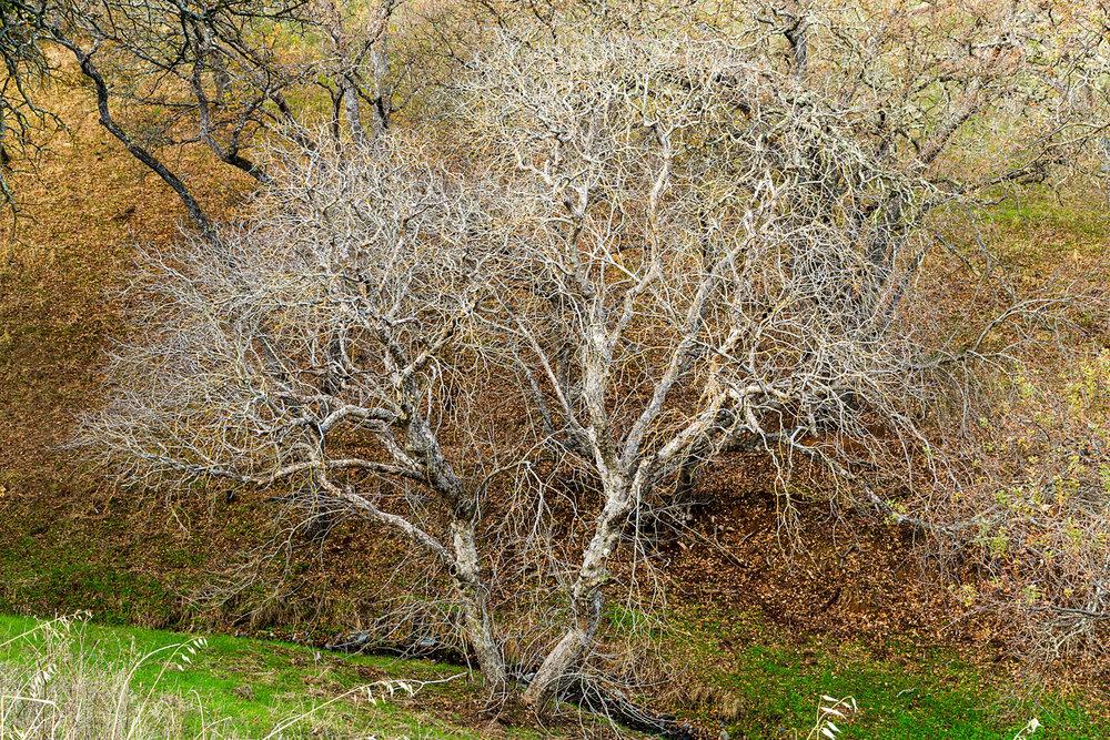 Back Creek Trail Mount Diablo State Park-12.jpg