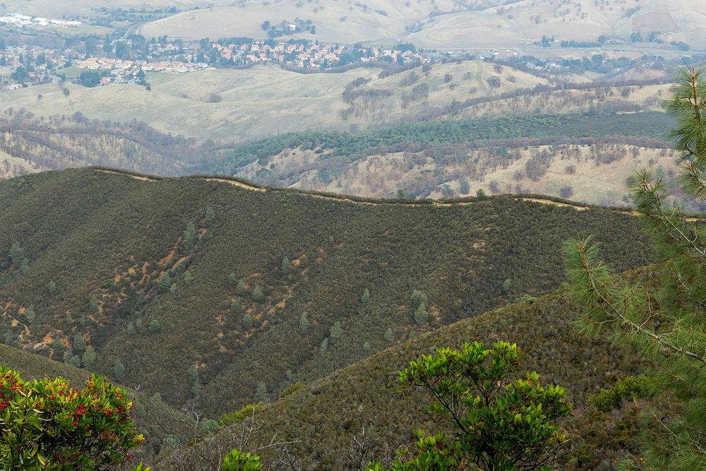 Back Creek Trail Mount Diablo State Park-15.jpg