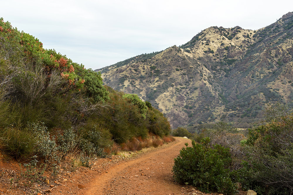 Back Creek Trail Mount Diablo State Park-17.jpg
