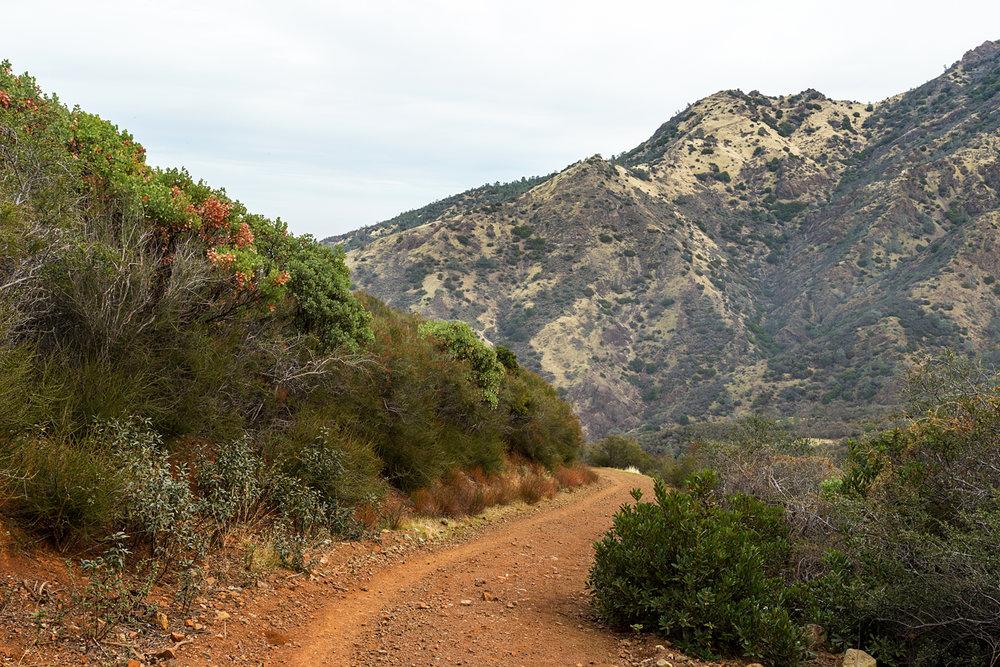Back Creek Trail Mount Diablo State Park-17.jpg