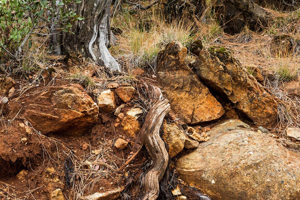 Back Creek Trail Mount Diablo State Park-16.jpg
