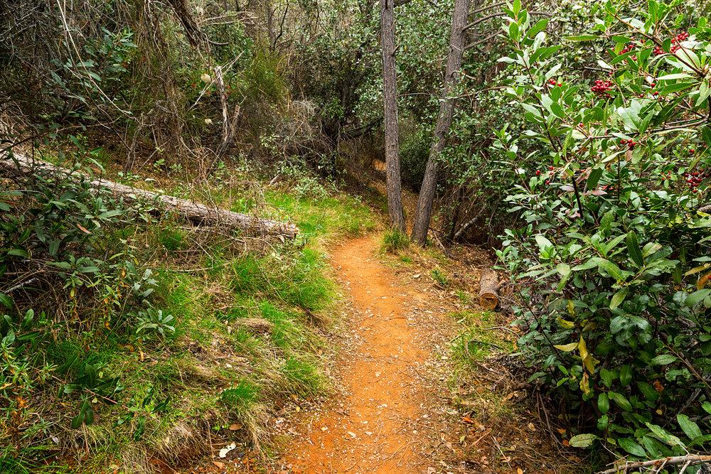 Back Creek Trail Mount Diablo State Park-22.jpg