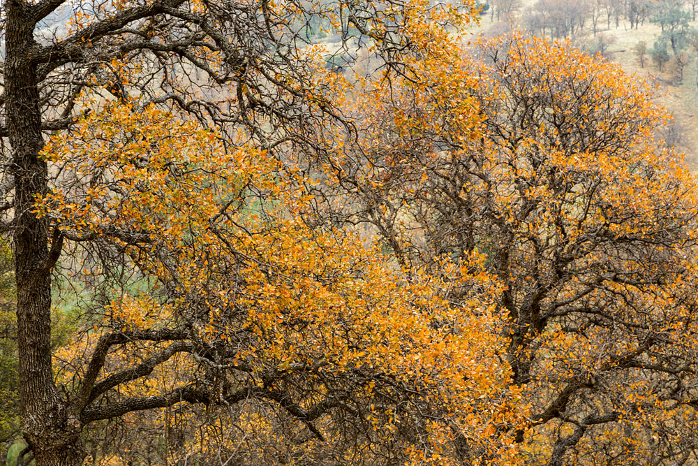 Back Creek Trail Mount Diablo State Park-23.jpg