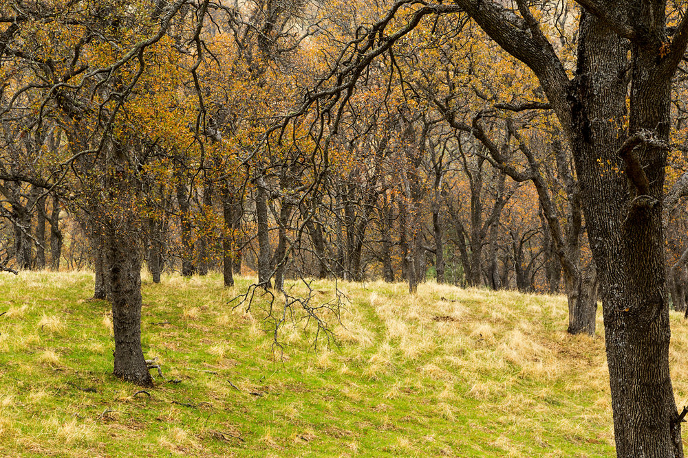 Back Creek Trail Mount Diablo State Park-24.jpg