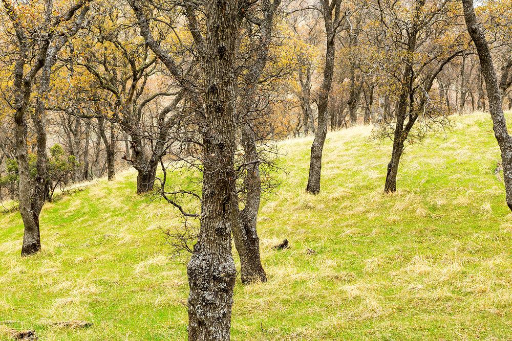 Back Creek Trail Mount Diablo State Park-25.jpg