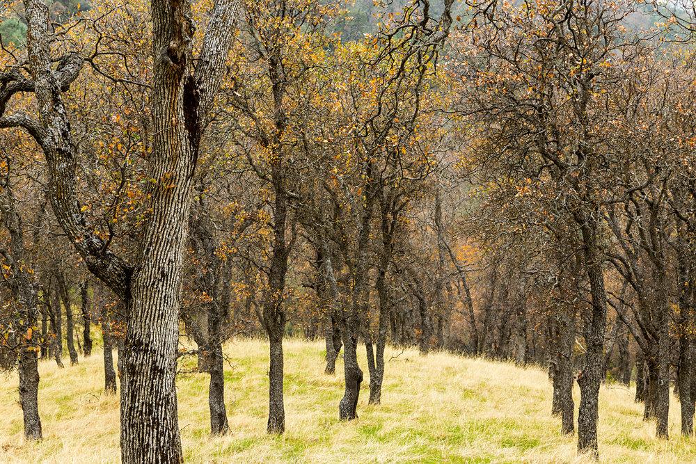 Back Creek Trail Mount Diablo State Park-26.jpg