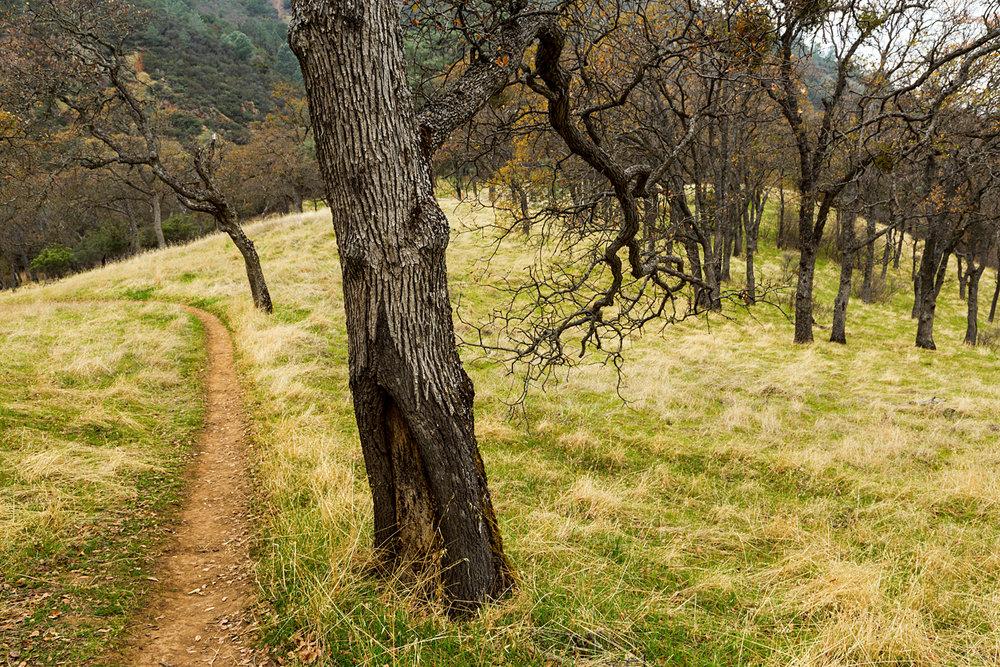Back Creek Trail Mount Diablo State Park-27.jpg
