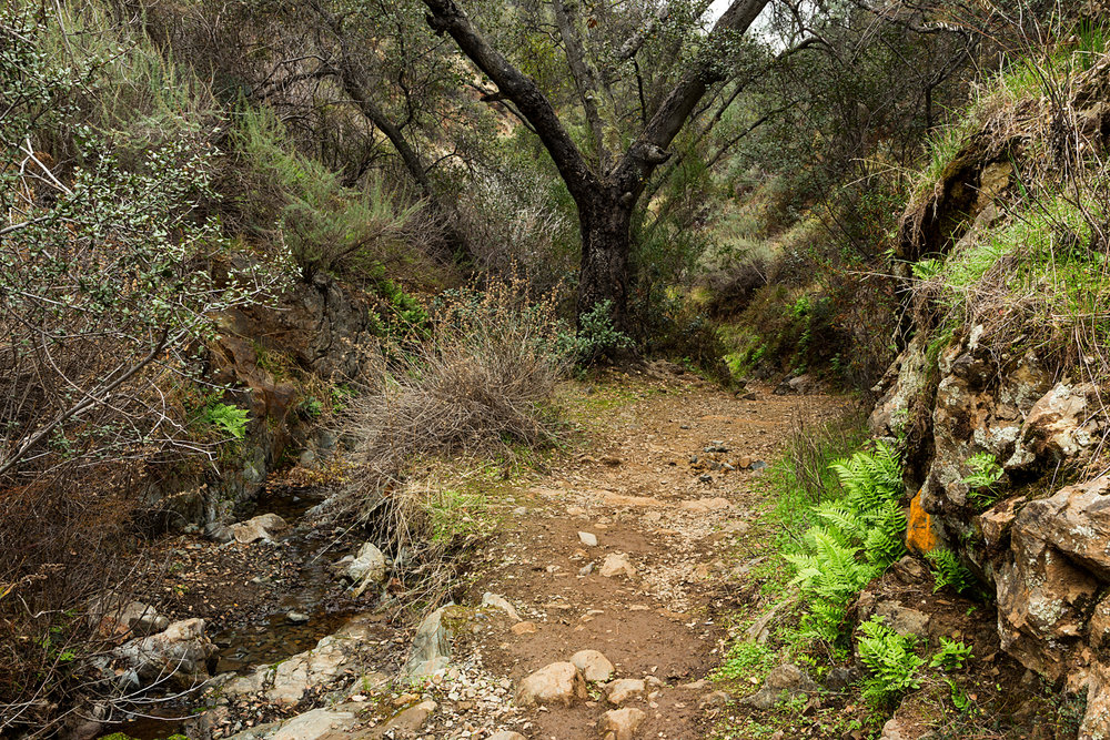 Back Creek Trail Mount Diablo State Park-28.jpg
