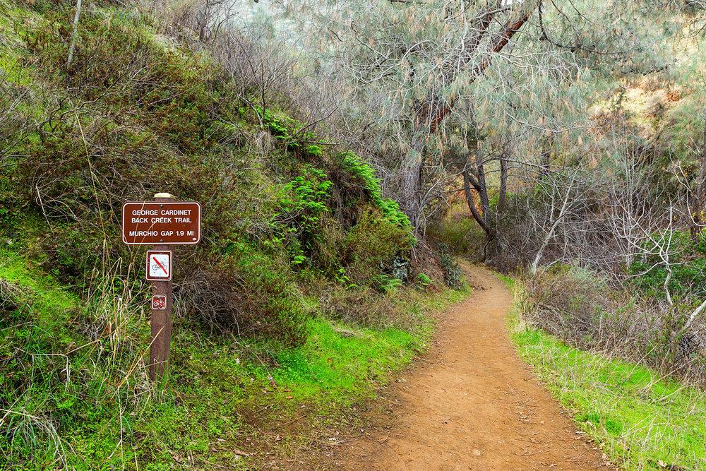 Back Creek Trail Mount Diablo State Park-31.jpg