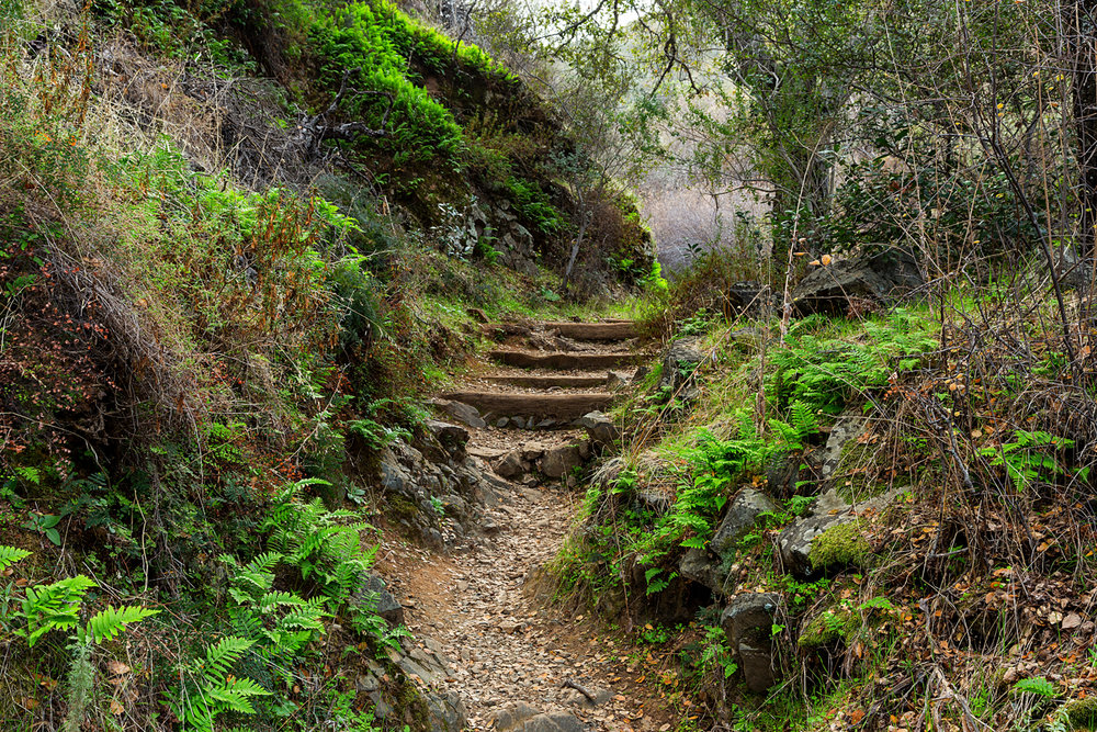 Back Creek Trail Mount Diablo State Park-33.jpg