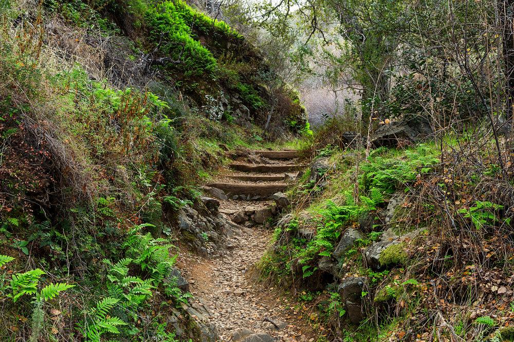 Back Creek Trail Mount Diablo State Park-33.jpg