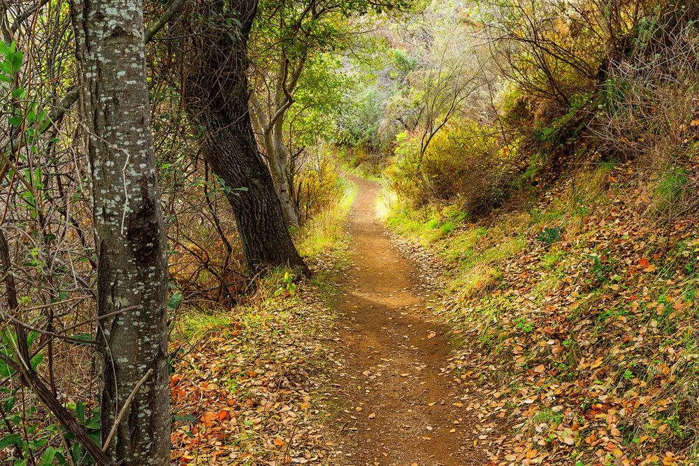 Back Creek Trail Mount Diablo State Park-34.jpg