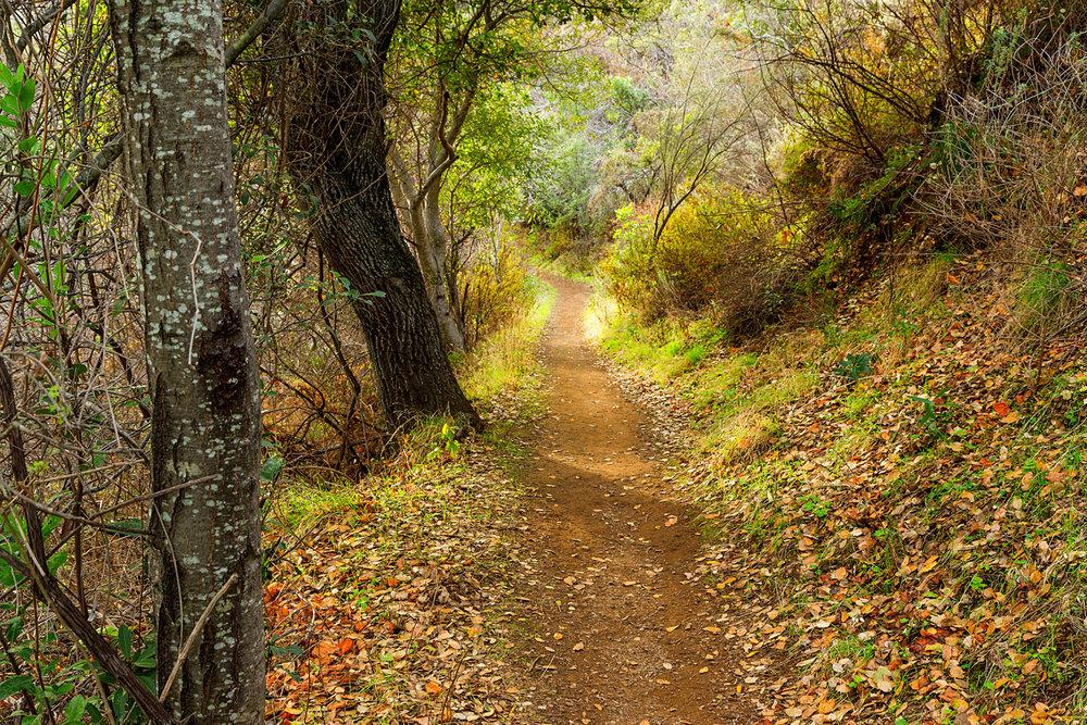 Back Creek Trail Mount Diablo State Park-34.jpg