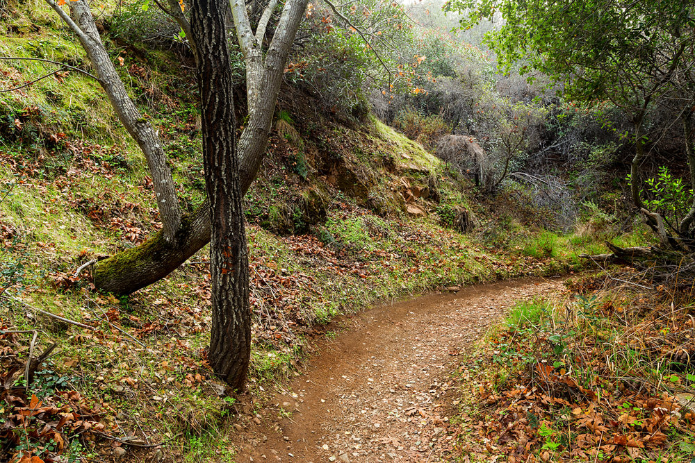 Back Creek Trail Mount Diablo State Park-35.jpg