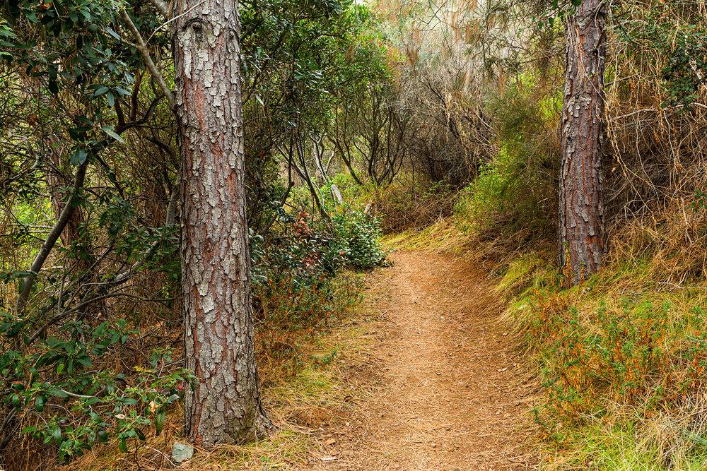 Back Creek Trail Mount Diablo State Park.jpg