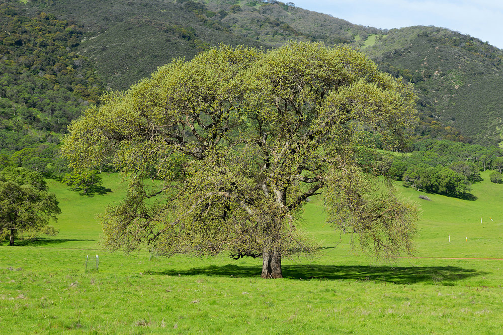 Miwok and Murphy Meadow Loop Hike - Round Valley Regional Preserve