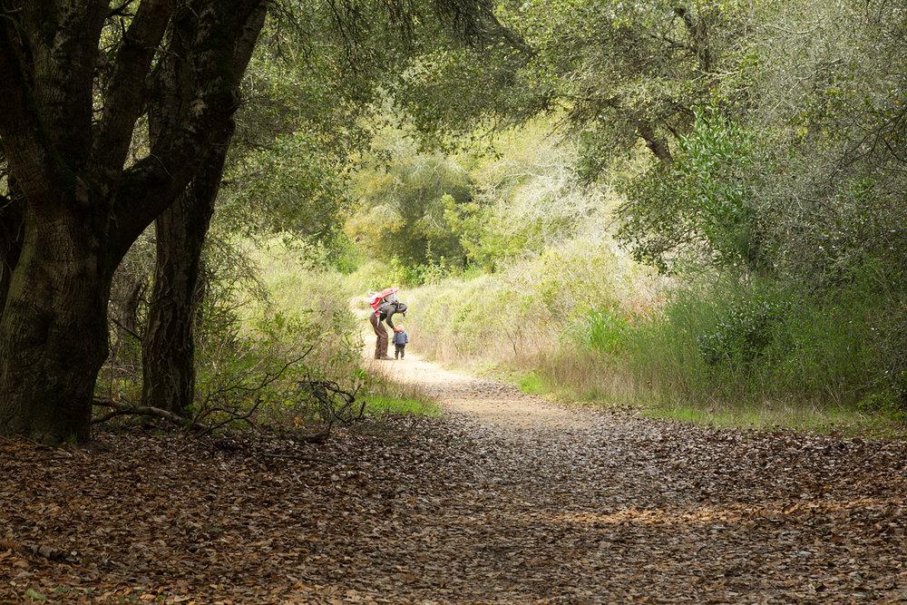 Redwood Regional Park Redwoods_-5.jpg