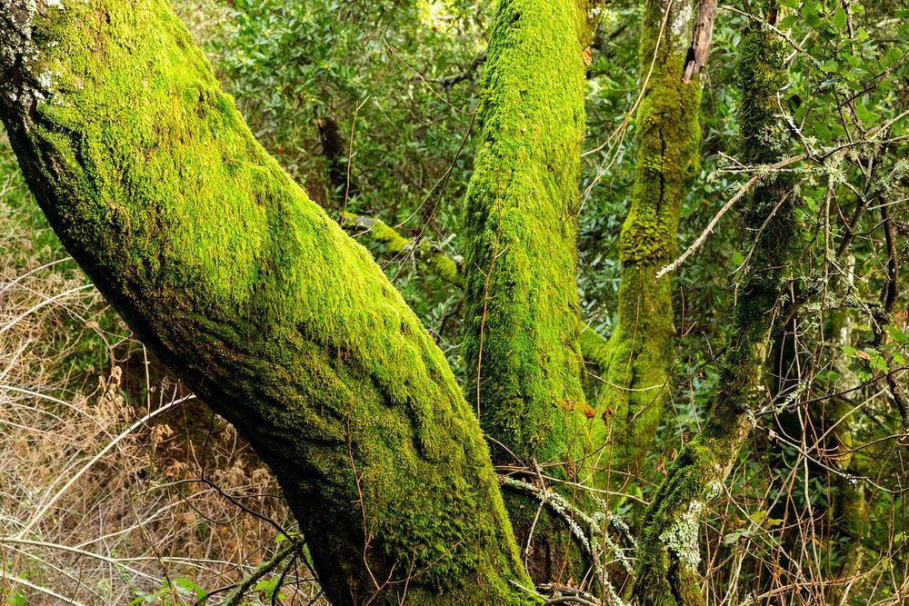 Redwood Regional Park Redwoods_-15.jpg