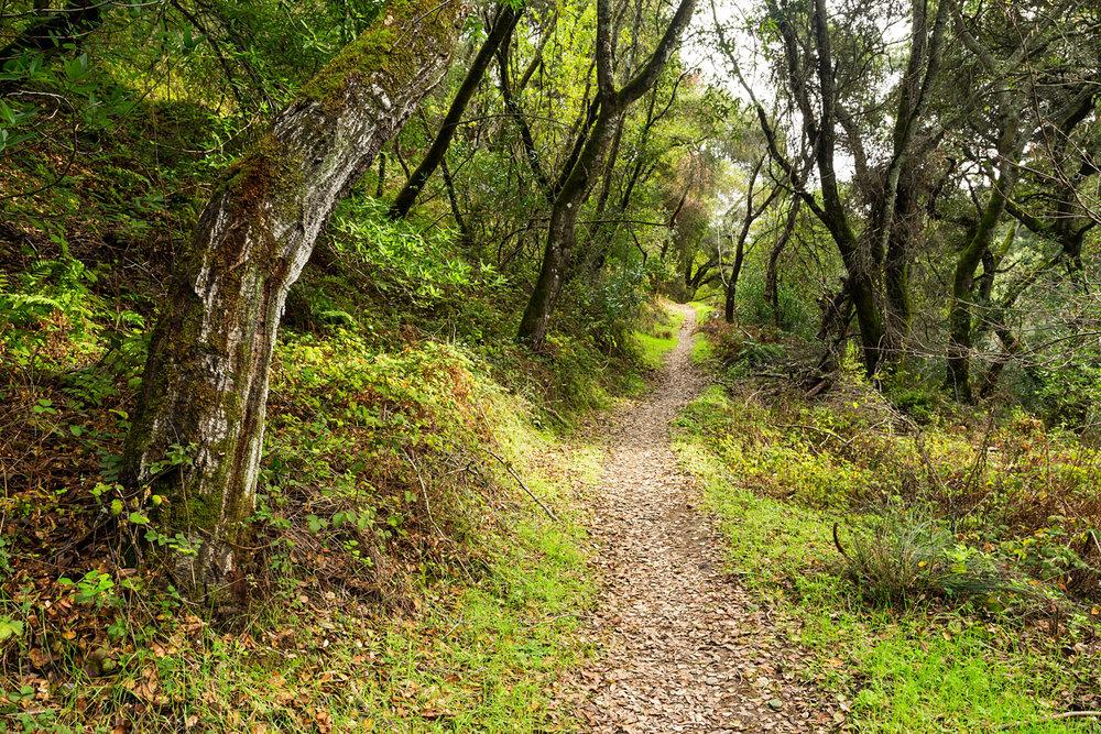 Redwood Regional Park Redwoods_-14.jpg