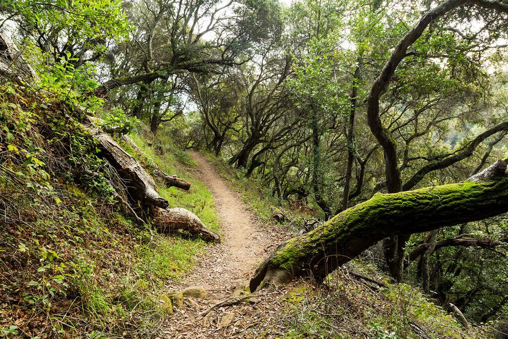 Redwood Regional Park Redwoods_-17.jpg