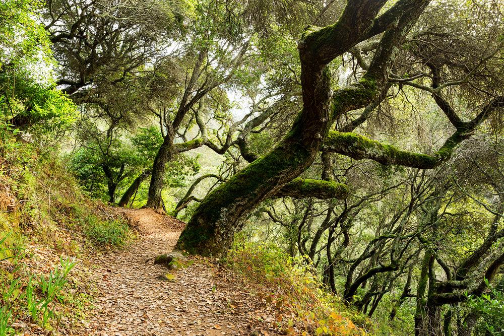 Redwood Regional Park Redwoods_-20.jpg