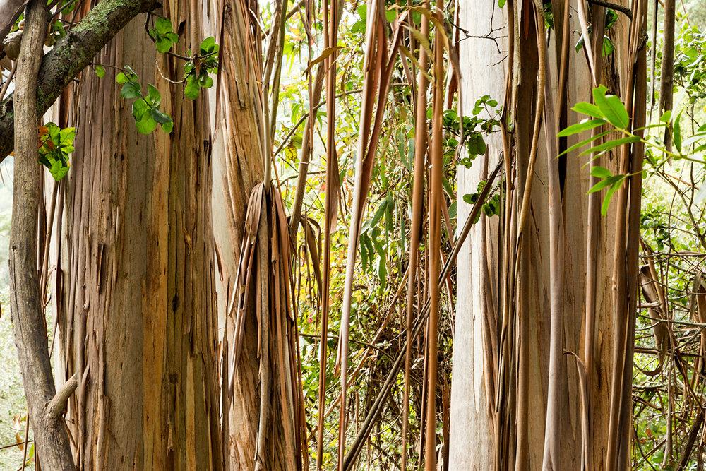 Redwood Regional Park Redwoods_-22.jpg