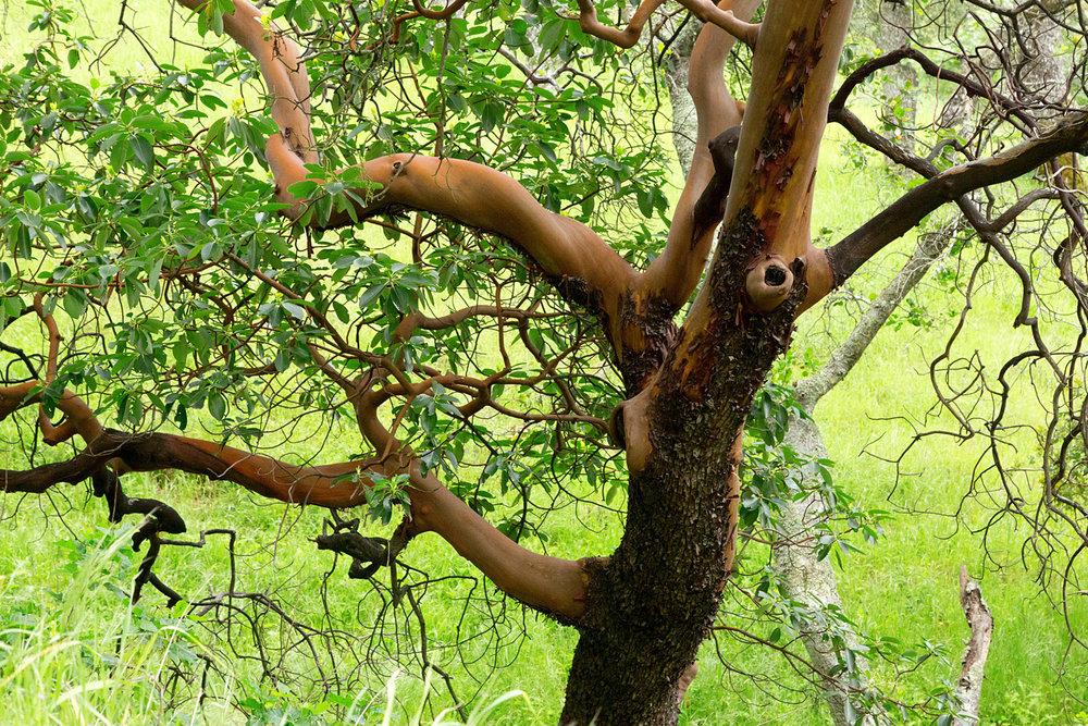 mount diablo state park pine canyon-6.jpg
