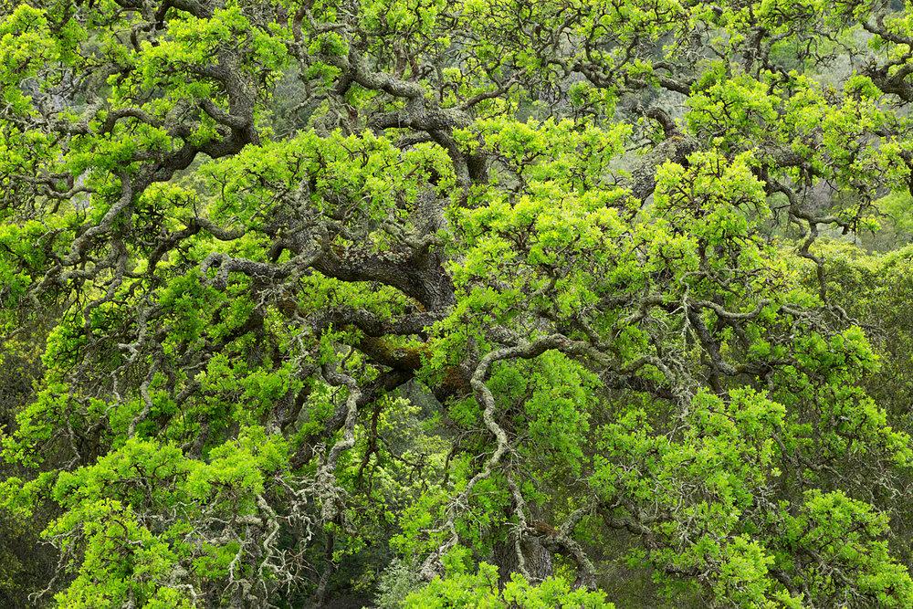 mount diablo state park pine canyon-13.jpg